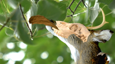 Deer-skull-leaf